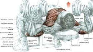 Тренировка груди и рук